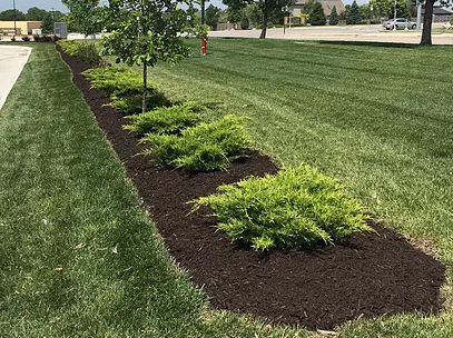 Black mulch with green plants