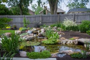 Aquatic plants in koi pond Omaha Nebraska